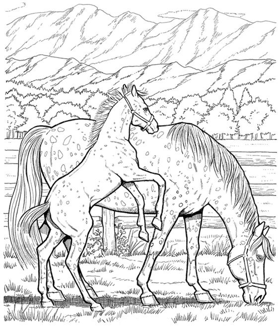 My Horse On The Meadow Coloring Page