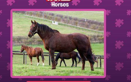 Jigsaw World Horses Game