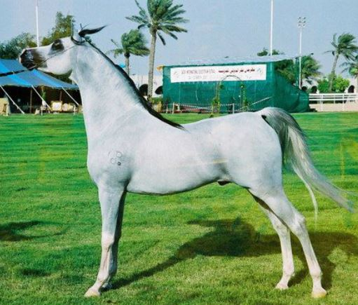 Arabian Horses Game