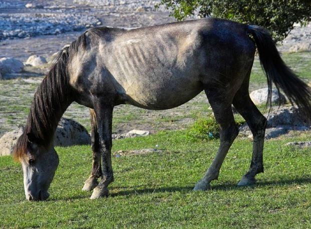 Azerbaijan Horse Game