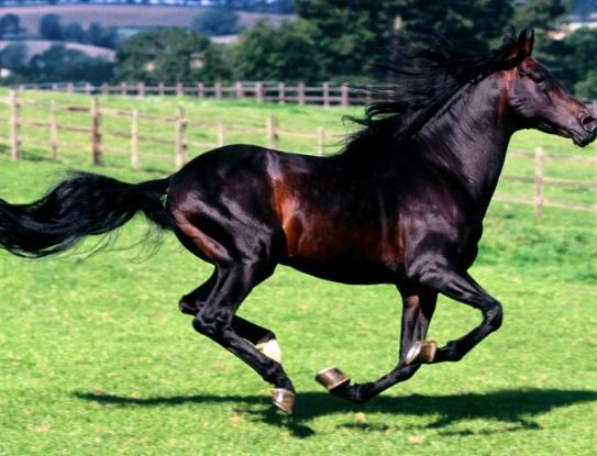 Azteca Horse Game