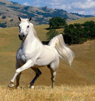Beautiful White Horse Game