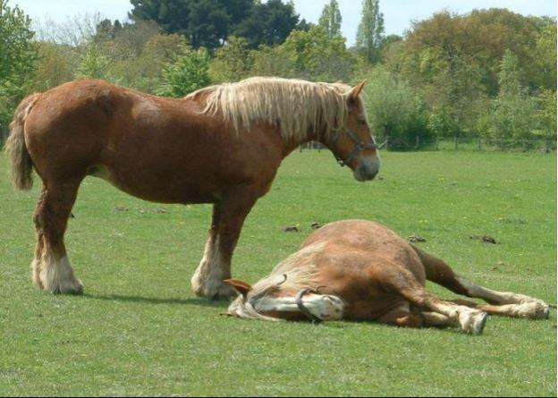 Breton Horse Game