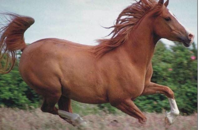 Furioso Horse Game