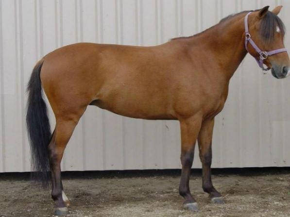 Gelderland Horse 2 Game
