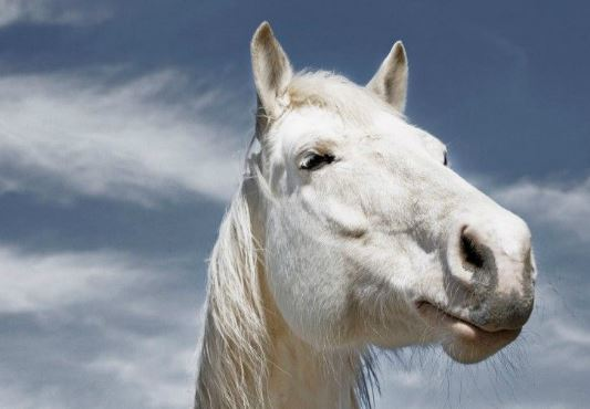 Horse Cloud 6x6 Game