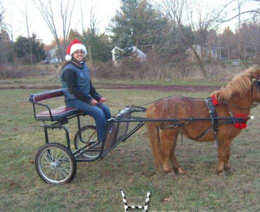 Mini Driving Pony Game