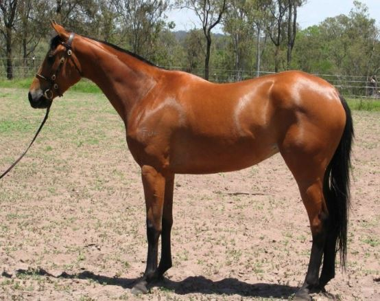 Australian Stock Horse Game