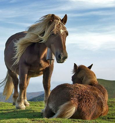 Basque Mountain Horse Game