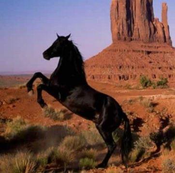 Black Horse Game