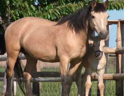 Blazer Horse Game