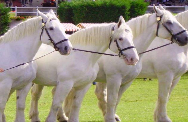 Boulonnails Horse Game