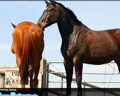 Horses Puzzle Game
