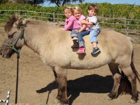 Kids Pony Game
