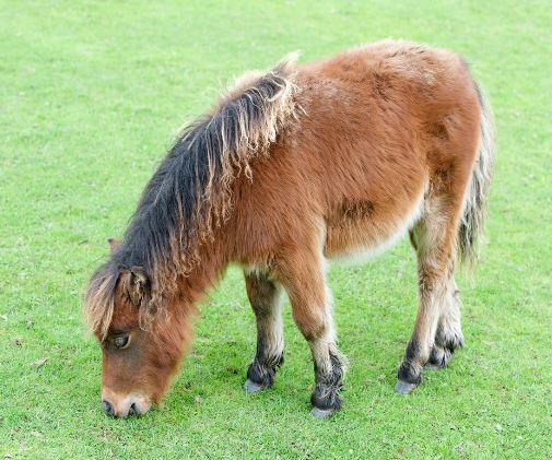 Miniature Pony 6x6 Game
