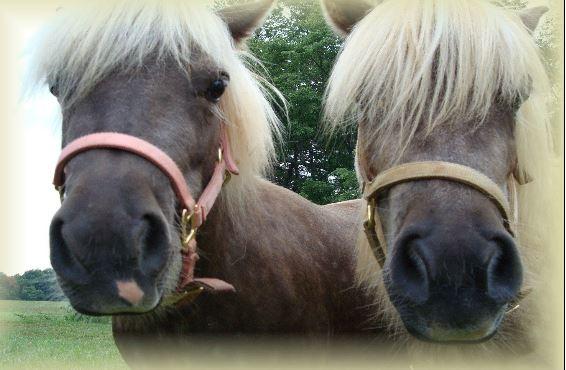 New Ponies 6x6 Game
