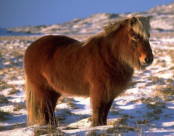 Pony Horse 6x6 Game