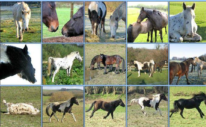 Pony Quiz Game