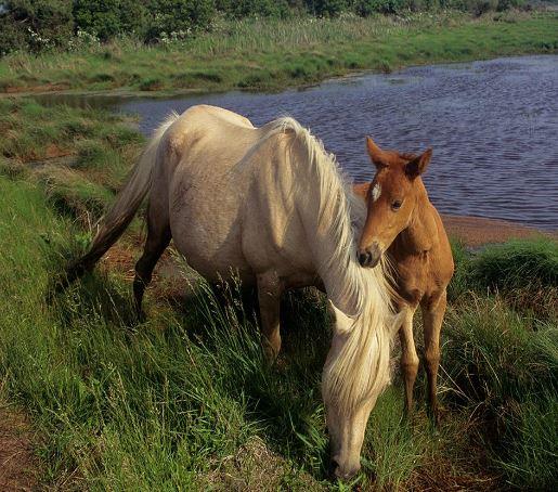 Wild Ponies Game