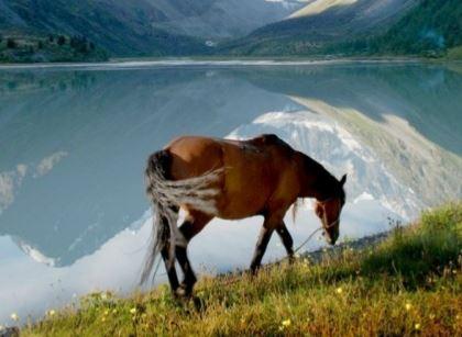 Altai Game