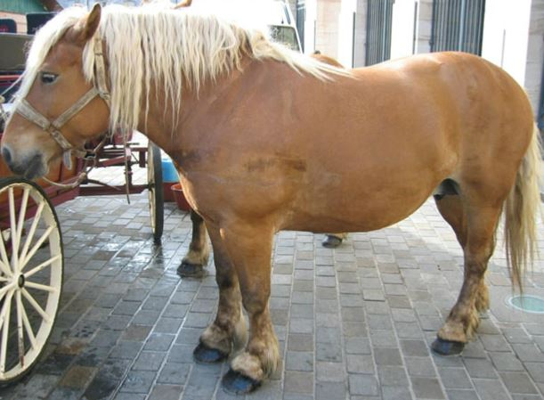Comtois Horse Game