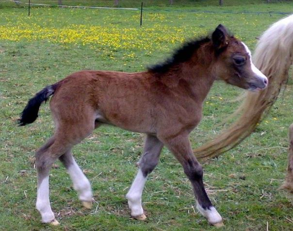 Foal One Day Old Game