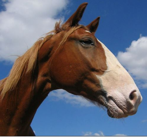 Frederiksborger Horse Game