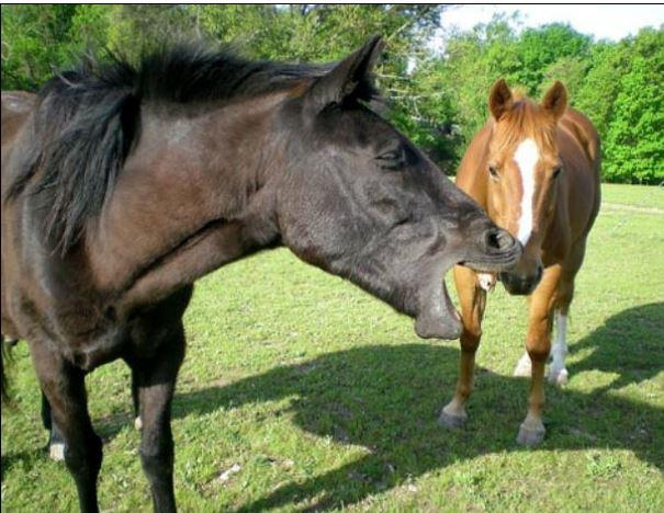 Galiceno Horse Game