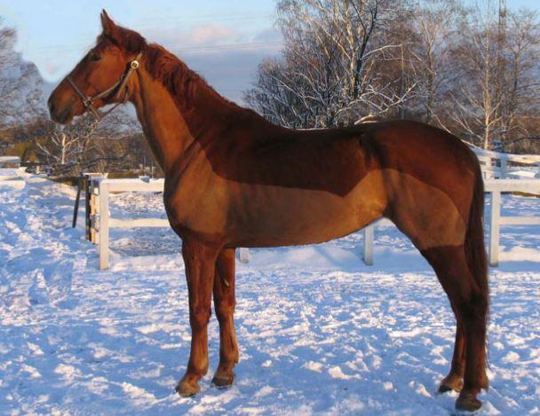 Gidran Horse Game