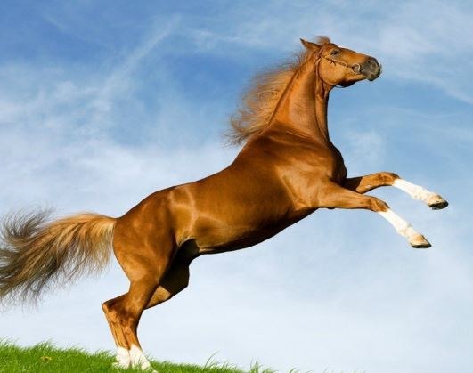 Horse Looks Game