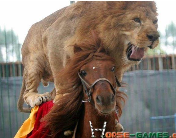 Lion Riding Horse Jigsaw Game