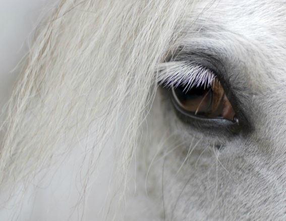 Peter Pony And The Bad Jockeys Game