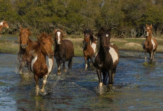 Ponies Running In Water Game