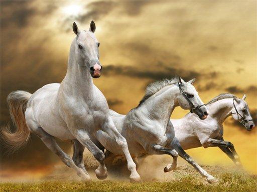 Running Horse Slide New Game