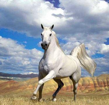 Stunning Horse Game